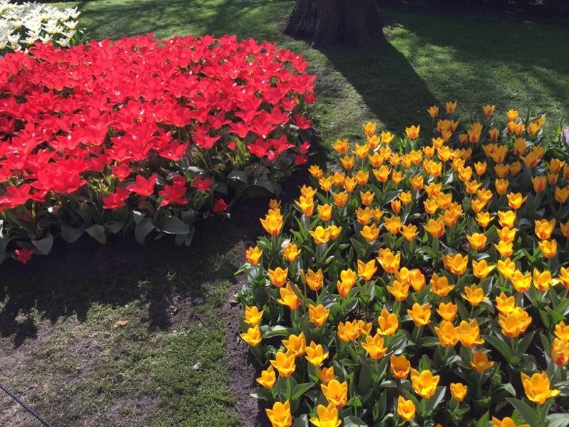 netherlands_Keukenhof_tulip01
