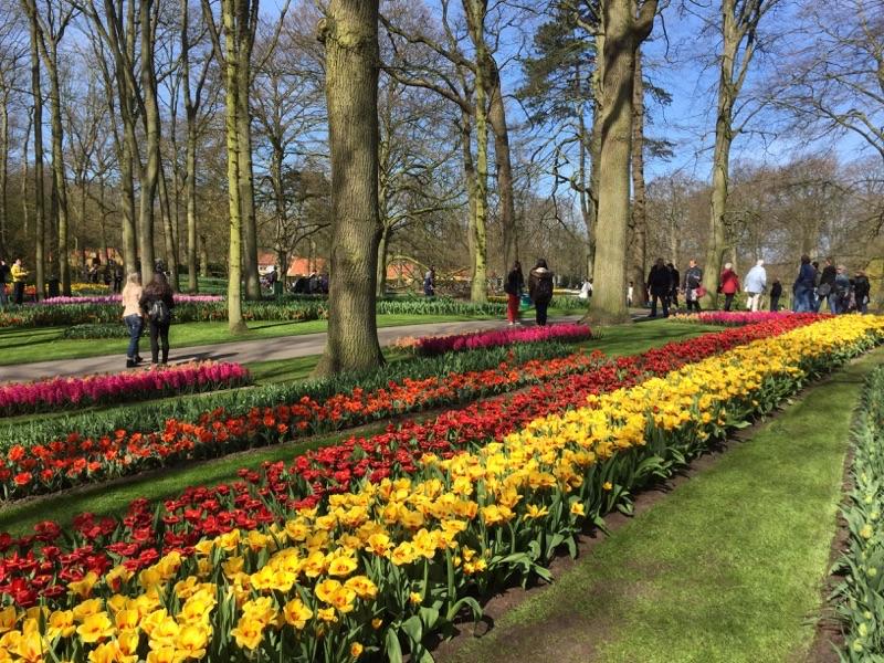 netherlands_Keukenhof_tulip02